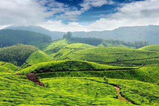 indisk te